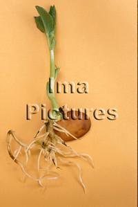 1-32-30-0072 vegetables; groenten; légumes; beans ;bonen; boon;haricots,;