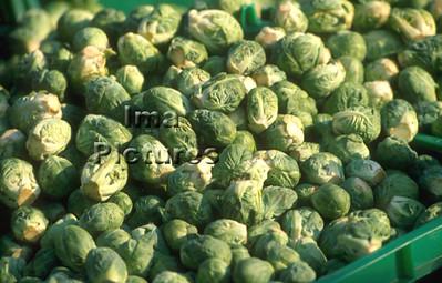 1-32-30 0082 vegetables groenten légumes brussels sprouts spruitjes choux de Bruxelles