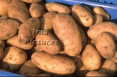 1-32-30 0302 vegetables groenten légumes potatoes aardappelen pommes de terre