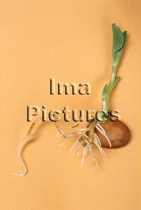 1-32-30-0071 vegetables; groenten; légumes; beans ;bonen; boon;haricots,;