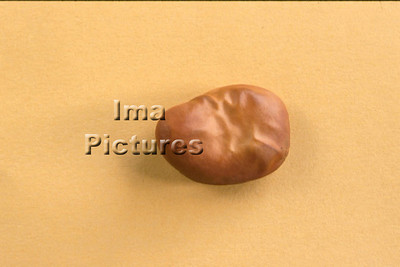 1-32-30-0066 vegetables; groenten; légumes; beans ;bonen; boon;haricots,;