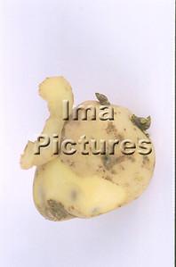 1-32-30 0290 vegetables groenten légumes potatoes aardappel pomme de terre