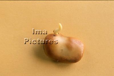 1-32-30-0067 vegetables; groenten; légumes; beans ;bonen; boon;haricots,;