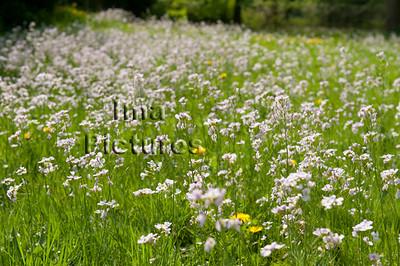 wild plants wilde planten plantes sauvages