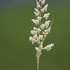 Grass<br /> Hafslovannet, Luster<br /> Canon EOS 50D + EF 400 mm 5,6 L