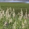 Grass ved Hafslovannet<br /> Hafslo, Sogn og Fjordane 6.7.2009<br /> Canon EOS 50D + 17-40 mm L