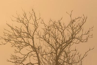 Trær i tåke og solnedgang Lyngås, Lier 7.12.2014 Canon 7D Mark II + EF 200 mm 2,8 L