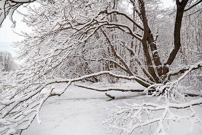 Tre i elvekanten Linnesstranda, Lier 13.1.2008