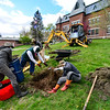 KRISTOPHER RADDER — BRATTLEBORO REFORMER<br /> Volunteers from Edible Brattleboro plant three cherry trees on the lawn of Municipal building, in Brattleboro, on Tuesday, May 12, 2020.