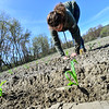 KRISTOPHER RADDER — BRATTLEBORO REFORMER<br /> Mikala Chase, an employee at Harlow Farm, in Westminster, Vt., removes extra dirt from the newly planted corn while planting on a field of corn on Thursday, May 14, 2020.