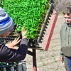 KRISTOPHER RADDER — BRATTLEBORO REFORMER<br /> Clayton Groenewold grabs little corn plants from their tray as he feeds them into a machine on the back of a tractor that will plant them into the ground as Mikala Chase watches at Harlow Farm, in Westminster, Vt., on Thursday, May 14, 2020.