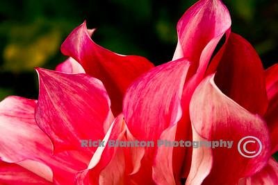 Floral Flames