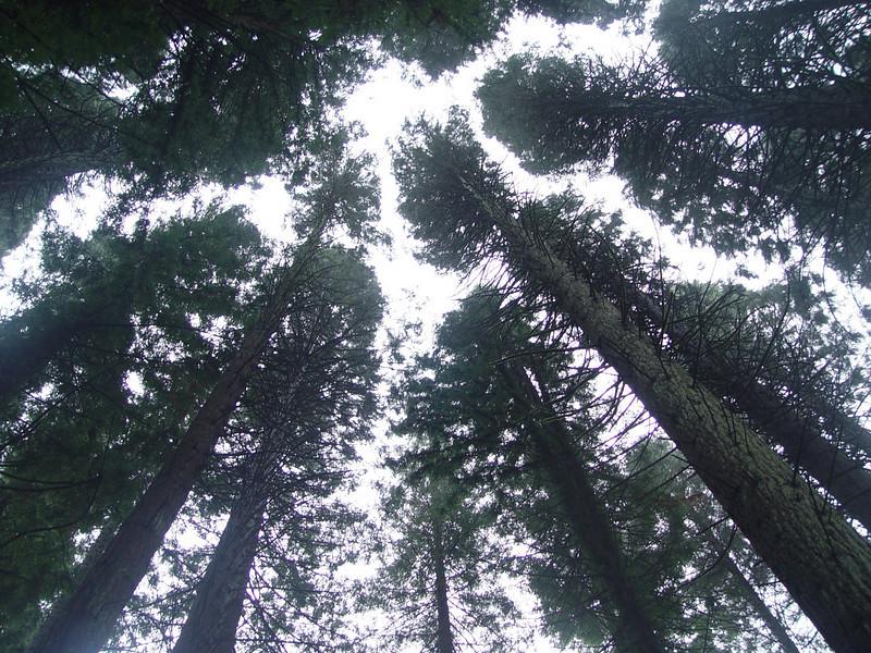 The Coast & Giant Redwood Grove