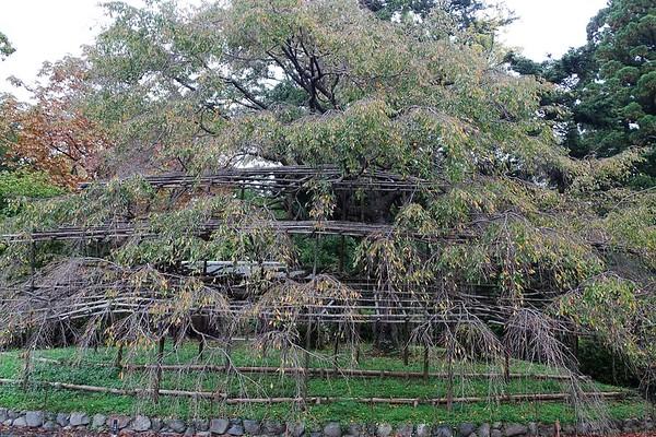 Kyoto Botanic Garden