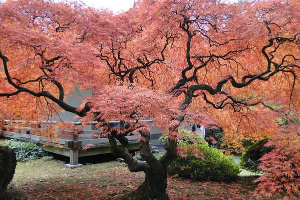 Portland Japanese Garden - 2011/11/11