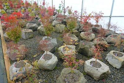 Buchholz & Buchholz Nursery 2015/10/30