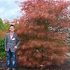 Buchholz Nsy - A palmatum Fairy Hair 2