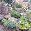 OG Conifer Garden 3