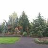 OG Conifer Garden 1
