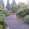 OG Conifer Garden 2