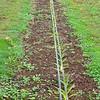 Whitman Farms - New Planting 2