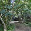 The UBC Garden