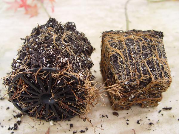 Air Pot™ Root Comparisons