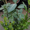 Some Xera Plants!