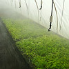 The Plantmad Mist System