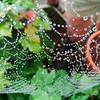 Spider Webb!