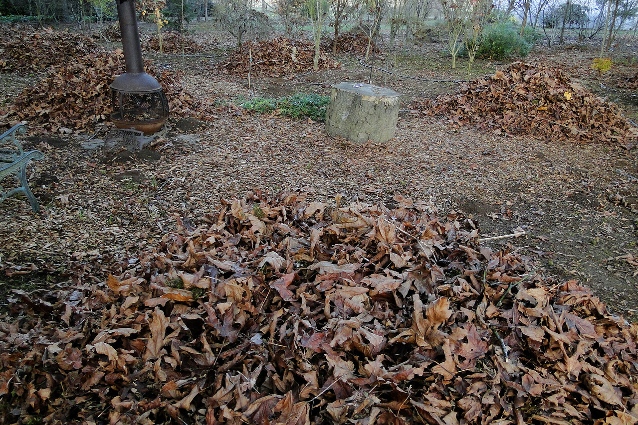 The Dreaded Garden Leaf Cleanup!