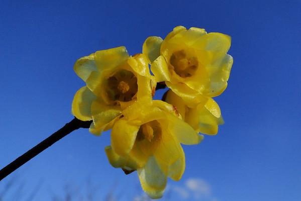 Plantmad Blog Pics
