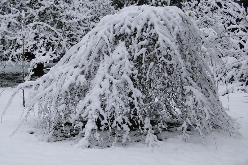March 1st Garden Snowpocalips I,