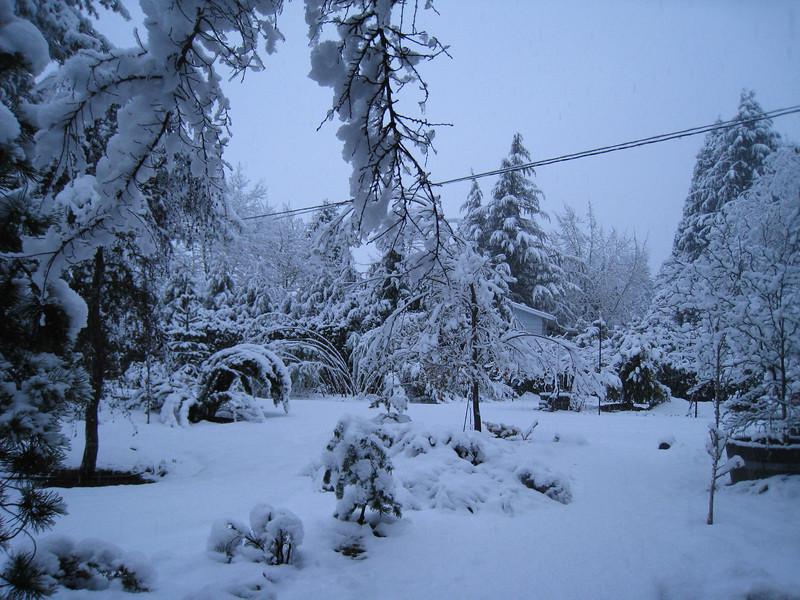 March 1st Garden Snowpocalips I <FONT SIZE=1>© Chiyoko Meacham</FONT>