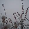 March 21st Garden Snowpocalips III <FONT SIZE=1>© Chiyoko Meacham</FONT>