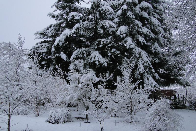 The Back Garden<br /> March 1st Garden Snowpocalips I,