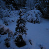 Early Morning, March 13th <br /> Garden Snowpocalips II