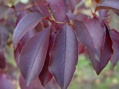 2008 - Autumn Color at plantmad