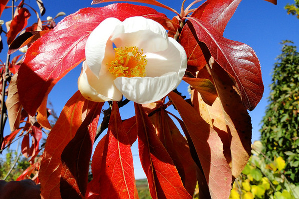 2013 - Fall Color at Plantmad