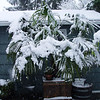 The Palm tree always falls to bits when it snows!!