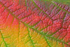Fall colors in a leaf