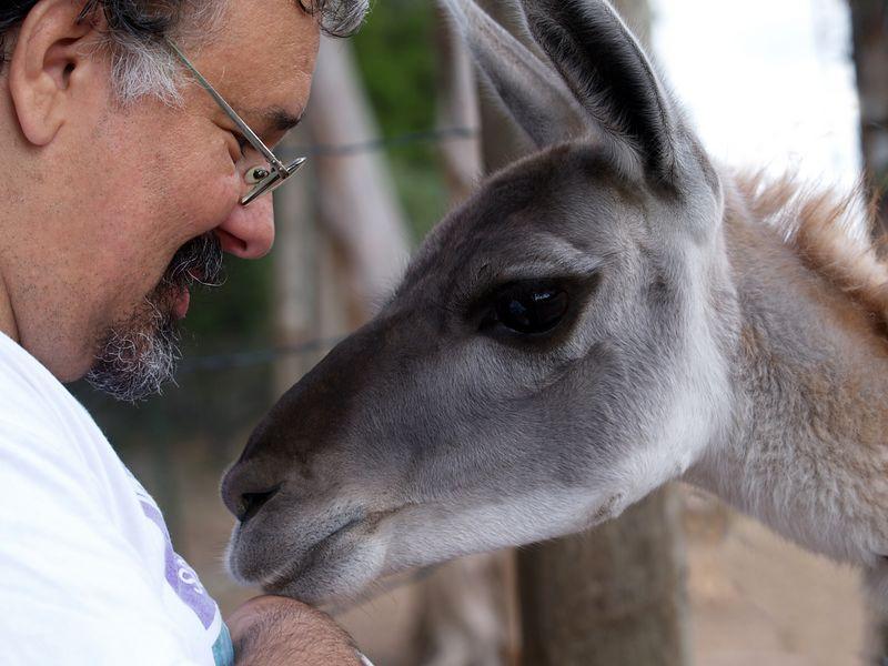 Steve and Llama