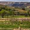 Prairie Dog in the North Dakota Badlands, Theodore Roosevelt National Park