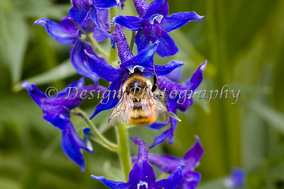 Witches Hat and Honey Bee