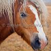 Beautiful Blonde Horse
