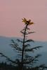 'Flowerin' Focus'