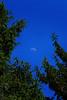 'Cradle the Moon'