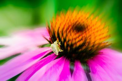 Creamy bug @ Jordan River Walkway, Utah