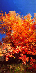 Fall Art; city creek canyon @ Salt Lake city, Utah