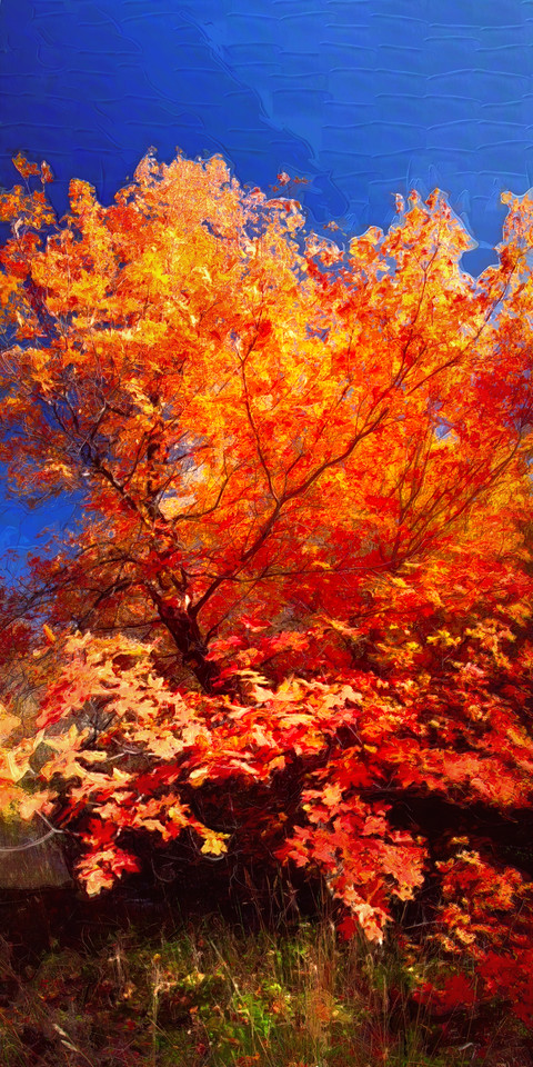 Fall Art; city creek canyon @ Salt Lake city, Utah